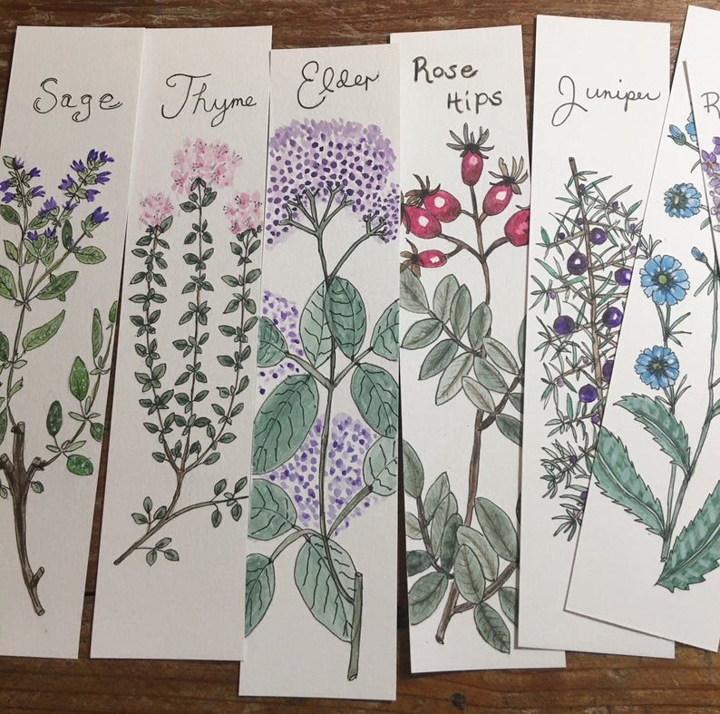 Herb Botanical Watercolor Art by Lisa Ray